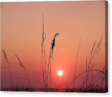 Sunset In Tall Grass Canvas Print by Bill Cannon