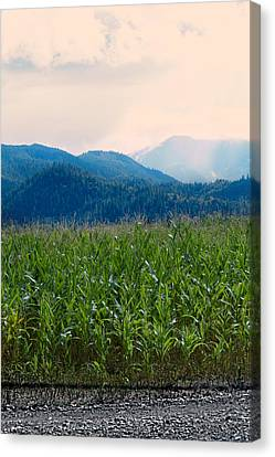 Sunset In The Cornfields Canvas Print by Melanie Lankford Photography