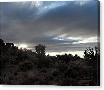Sunset In The Desert Canvas Print by James Welch