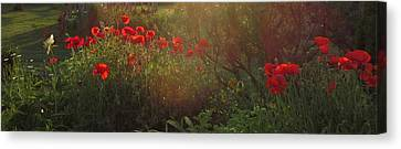 Sunset In The Poppy Garden Canvas Print by Mary Wolf
