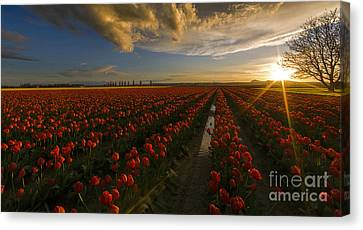 Sunset In The Skagit Valley Canvas Print by Mike Reid