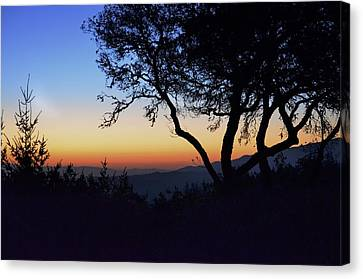 Sunset In Woodside  Canvas Print by Alex King
