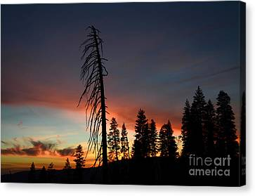 Sunset In Yosemite Canvas Print