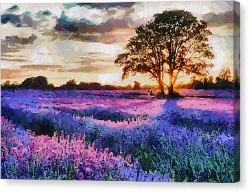 Sunset Lavender Field Canvas Print