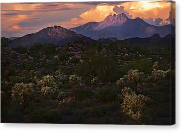 Sunset Lit Cactus Over Four Peaks Canvas Print by Dave Dilli