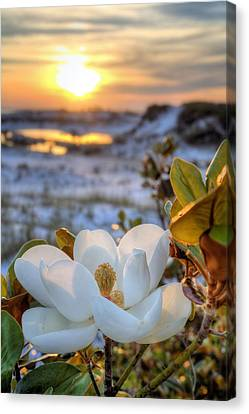 Sunset Magnolia Canvas Print by JC Findley
