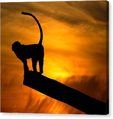 Shadows And Light Canvas Print - Monkey / Sunset by Martin Newman