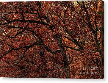 Sunset Oaks 2 Canvas Print by Trey Foerster