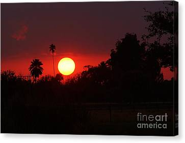 Sunset Off 11 Mile Canvas Print by Lynda Dawson-Youngclaus