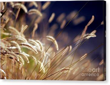 Canvas Print featuring the photograph Sunset On Autumn Grass by Lincoln Rogers
