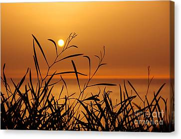 Sunset On Leaves  Canvas Print by Carlos Caetano