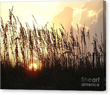 Sunset On The Dunes St. Augustine Canvas Print