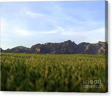 Sunset On The Golf Course Canvas Print by Rincon Road Photography By Ben Petersen