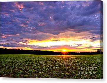 Spectacular Canvas Print - Sunset Over Farmland by Olivier Le Queinec