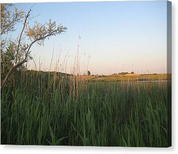 Sunset Over The Marshlands Canvas Print