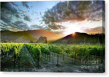 Wine Country Canvas Print by Jon Neidert