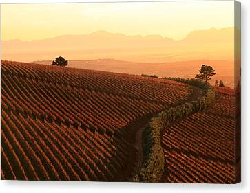 Sunset Over The Vineyards Canvas Print