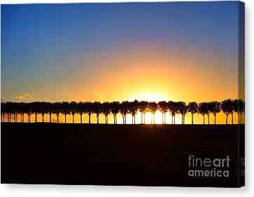 Sunset Over Tree Lined Road Canvas Print by Olivier Le Queinec