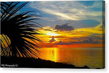 Sunset Palm Canvas Print by Marty Gayler