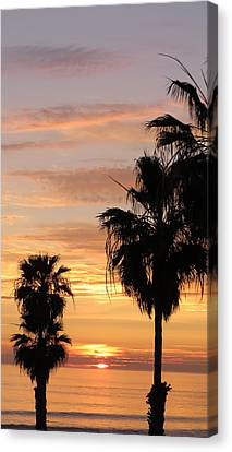 Sunset Palms Canvas Print by Charles Ables