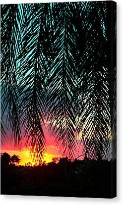 Sunset Palms Canvas Print by Laura Fasulo