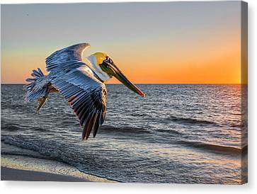 Canvas Print featuring the photograph Sunset Pelican by Brian Tarr