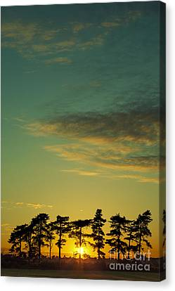 Sunset Pines Canvas Print by Paul Grand