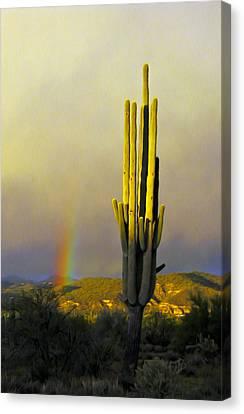 Canvas Print featuring the photograph Sunset Rainbow Cactus by John Haldane