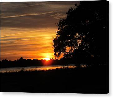 Canvas Print featuring the photograph Sunset Shadowed Oak by Joetta Beauford