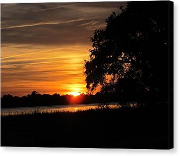 Sunset Shadowed Oak Canvas Print by Joetta Beauford