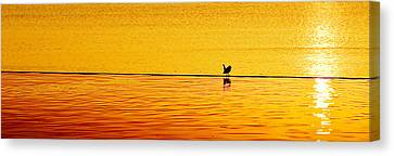 Sunset Silhouette Canvas Print by Darryl Dalton