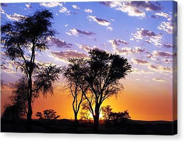 Sunset Splendour Canvas Print by Liudmila Di