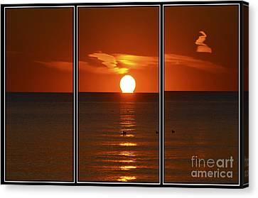 Sunset Swim Canvas Print by Cathy L Adams