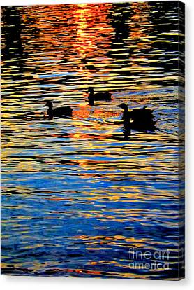 Sunset Swim Canvas Print by Robyn King