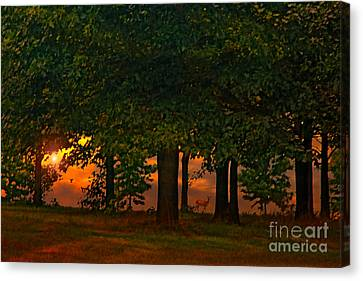 Sunset Through The Forest Canvas Print by Tom York Images