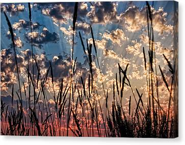 Canvas Print featuring the photograph Sunset Through The Grasses by Don Schwartz