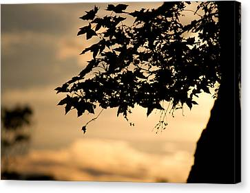 Canvas Print featuring the photograph Sunset Through The Trees by John Hoey