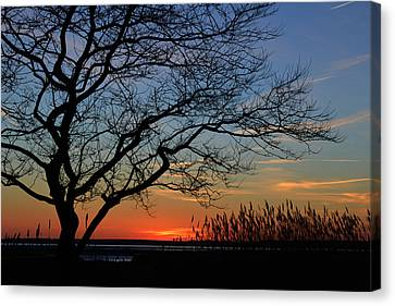 Sunset Tree In Ocean City Md Canvas Print by Bill Swartwout