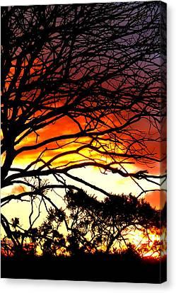 Sunset Tree Silhouette Canvas Print