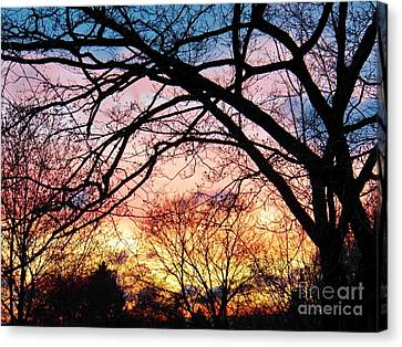 Sunset Under The Dogwoods Canvas Print by Judy Via-Wolff