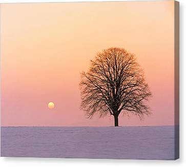 Sunset View Of Single Bare Tree Canvas Print by Panoramic Images