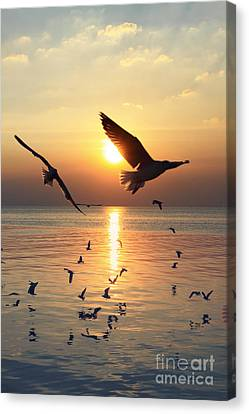 Sunset With Seagull Canvas Print