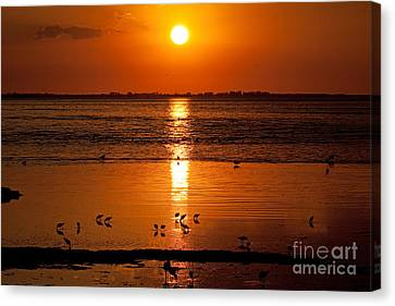 Canvas Print featuring the photograph Sunset With The Birds Photo by Meg Rousher