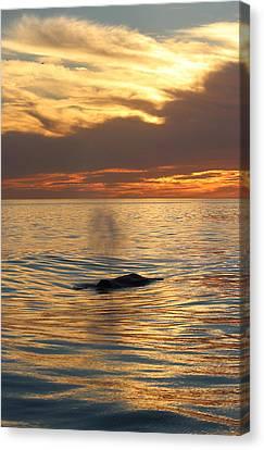 Sunset Wonder Canvas Print
