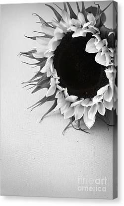 Sunshine 2 Canvas Print by Eden Baed