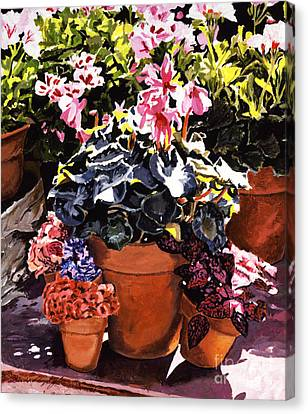 Sunshine And Flowerpots Canvas Print by David Lloyd Glover