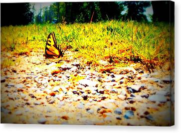 Sunshine Butterfly Canvas Print