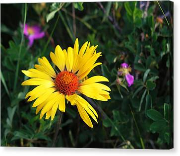 Sunshine Canvas Print by Craig T Burgwardt