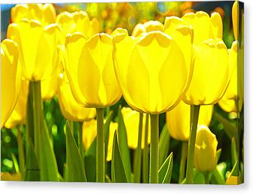 Sunshine Flower Canvas Print