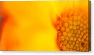 Sunshine Haiku  Canvas Print by Lisa Knechtel